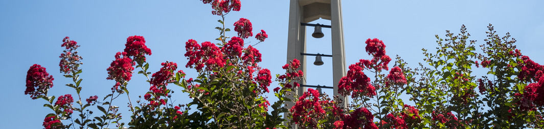 Bell tower with flowers in foreground.