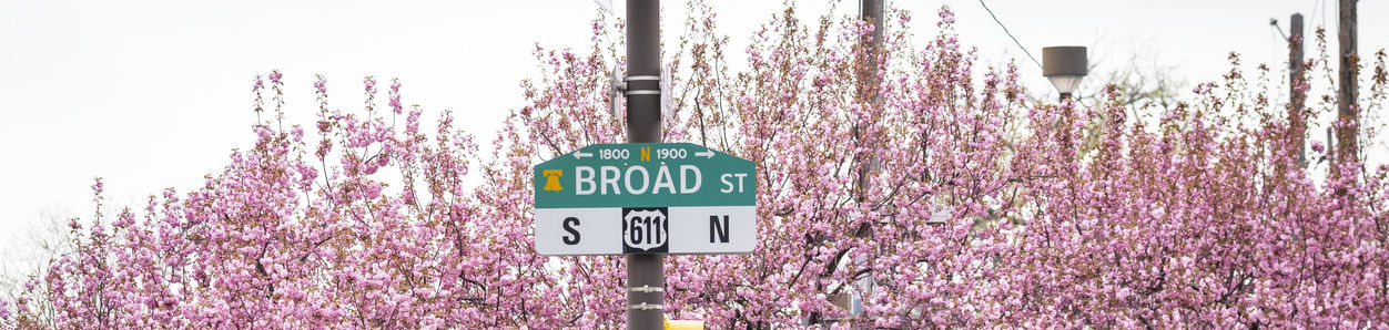 """Cherry blossoms with street sign that says """"Broad St."""""""